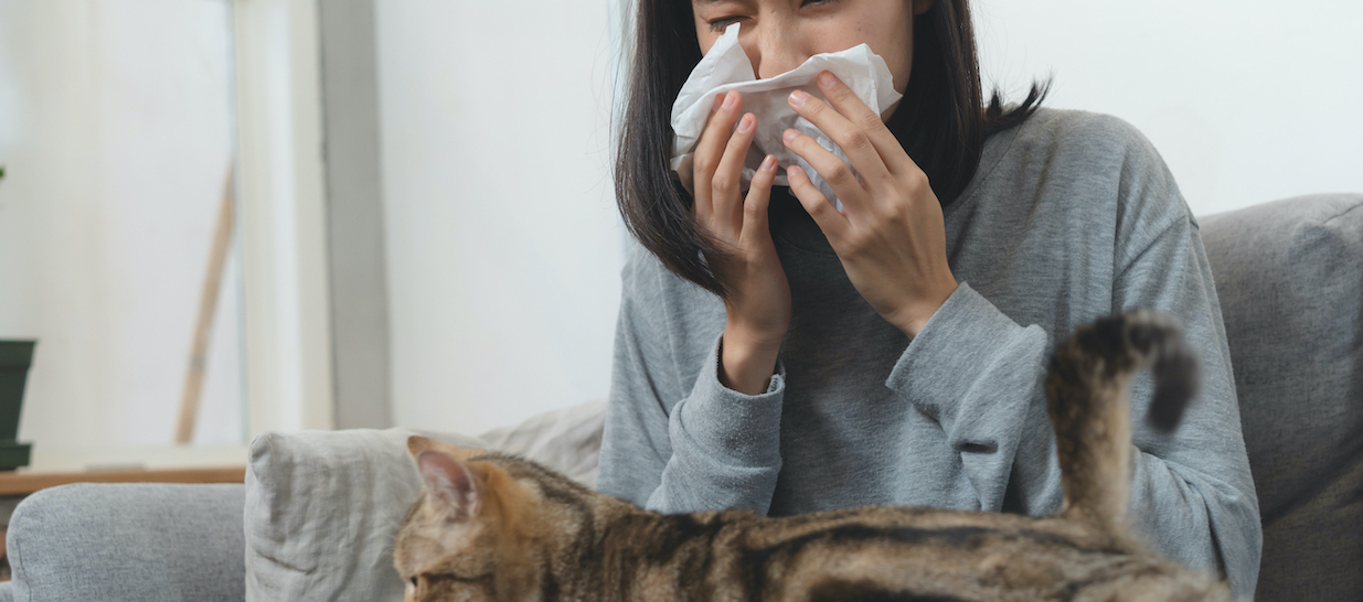 allergie aux chats