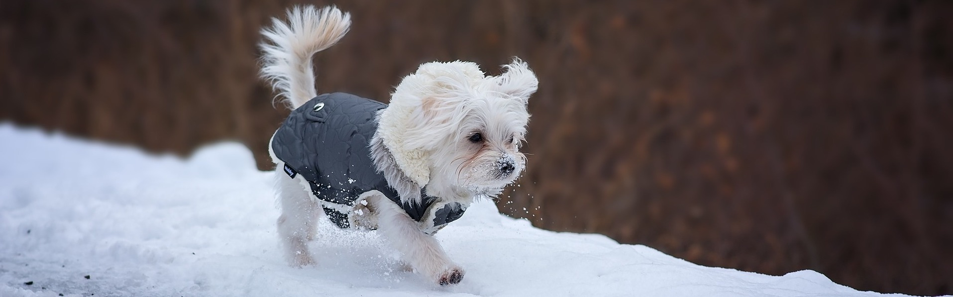 chien hiver manteau froid animaux